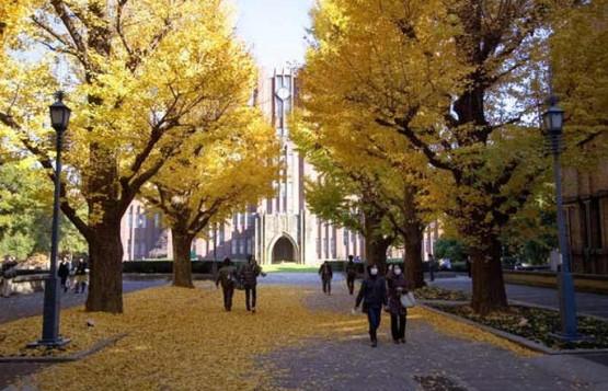 Đại học Tokyo Nhật Bản, nơi theo học của những thần đồng 1