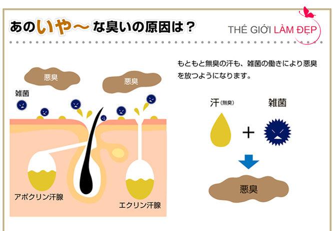 DM Deo macaron Nhật Bản 7