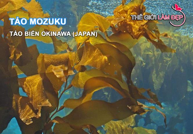 Fucoidan Umi no Seimei Nhat Ban - Tao mozuku-1