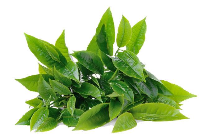 Green Coffee hộp 30 viên loại 800 mg -5