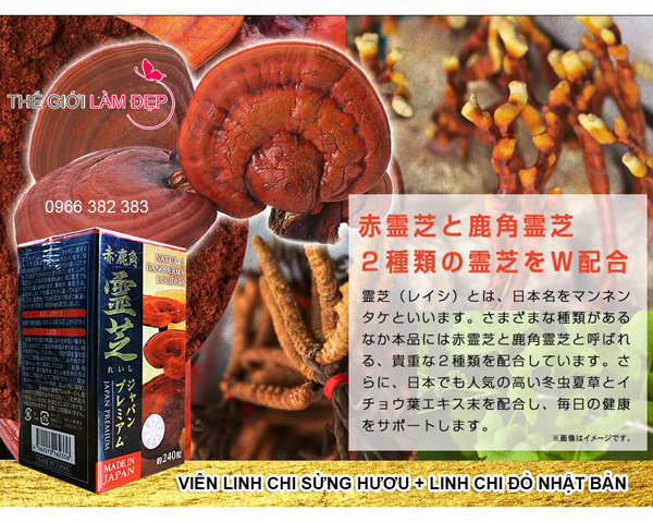 nam-linh-chi-sung-huou-nhat ban-240 vien 016
